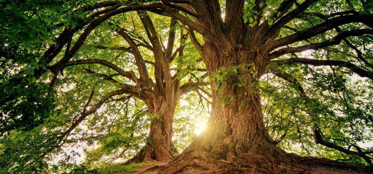 tree-CCE La Riviere